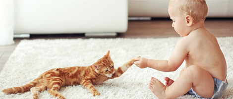 Baby playing with cat on hypo-allergenically cleaned rug