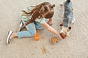 pet stain removal experts for healthy homes